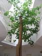 Дерево посеред дома растет
