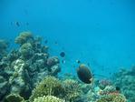 большой риф в море, большие фишки