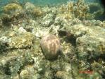 не большой коралловый риф прямо на отельном пляже