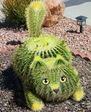 kaktus_kot