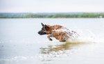Паря над водой!