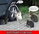 Хитрый Соклан