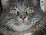 Это мой котяра.