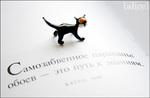 Самый маленький в мире кот