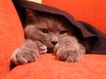Мой кот..)