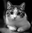мр. Кот