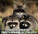 mushmini